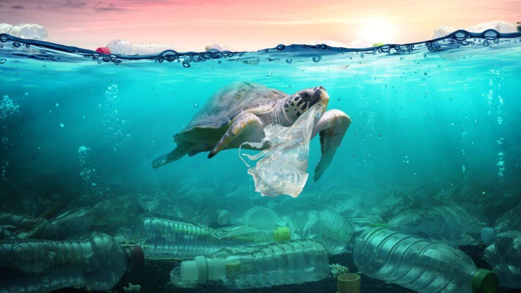 animales_plástico